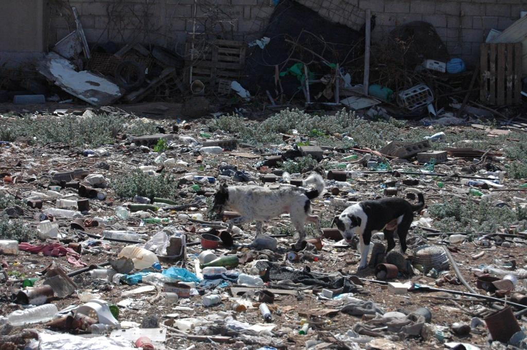 Perros del basurero de Gran Canaria