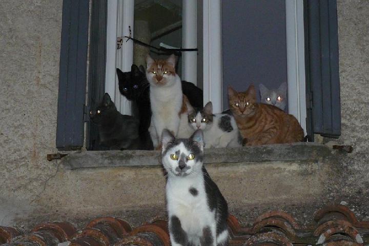 association chats grains d'amour