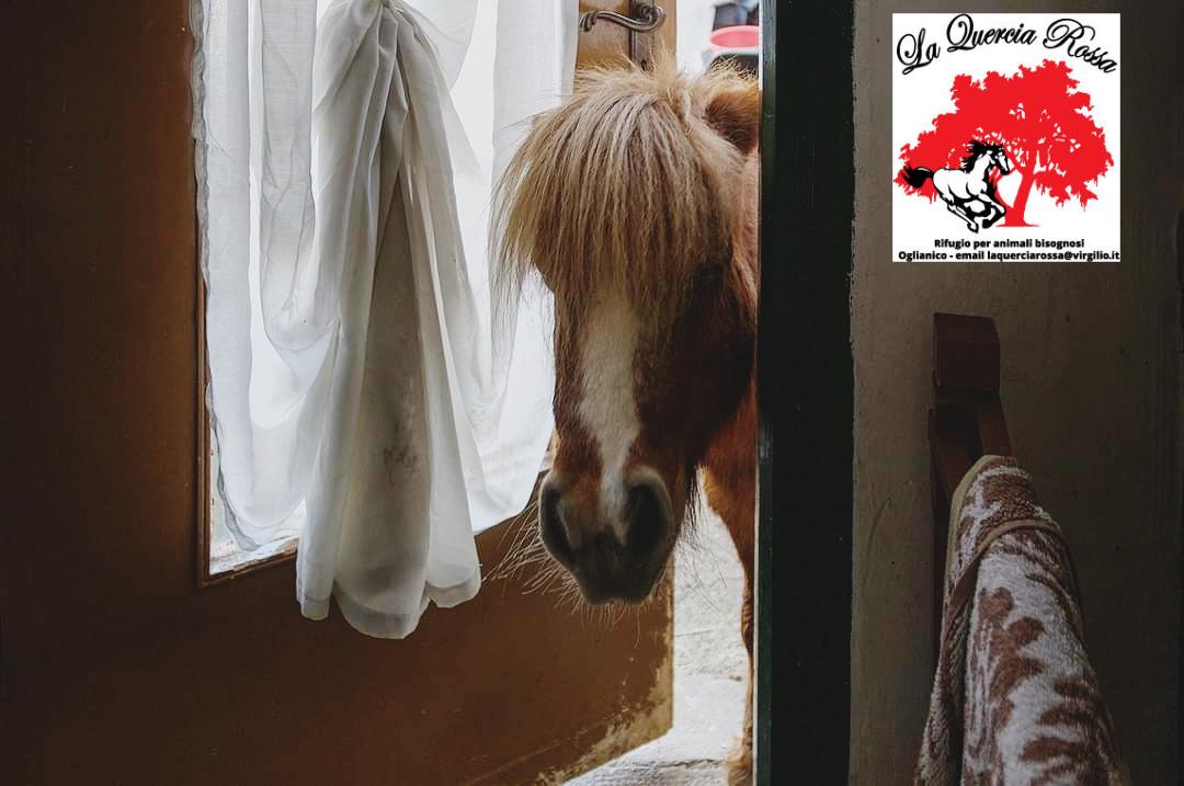 Associazione La Quercia Rossa