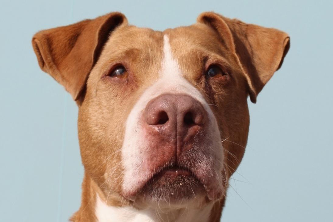 PROCCAN Asociacion protectora Canina