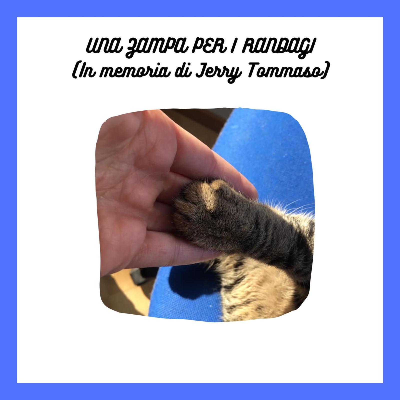 UNA ZAMPA PER I RANDAGI (In memoria di JT)