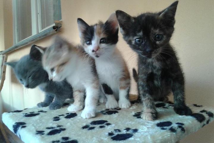 Laracats - Hope for Animals