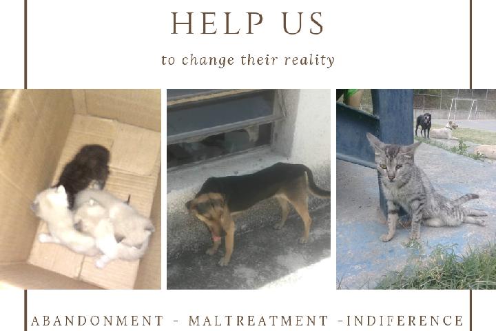 Ayuda a Refugio de animales en Venezuela