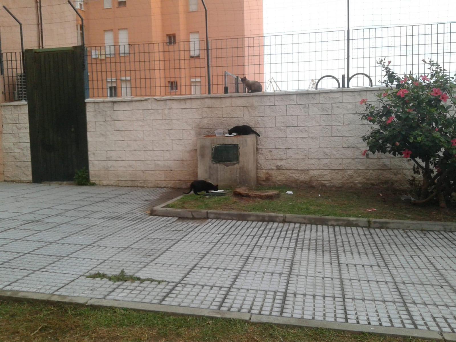 ayuda colonias de Paqui Cádiz