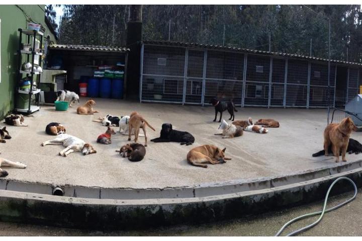 Un euro para el refugio de animales de APADAN