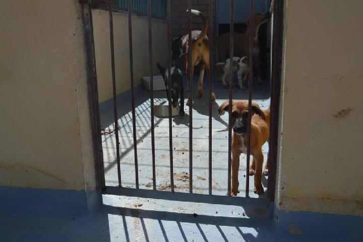 Hondenopvang de Pannehoeve
