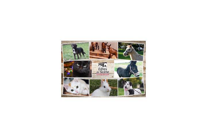 Bêtes de Scène - Protection Animale