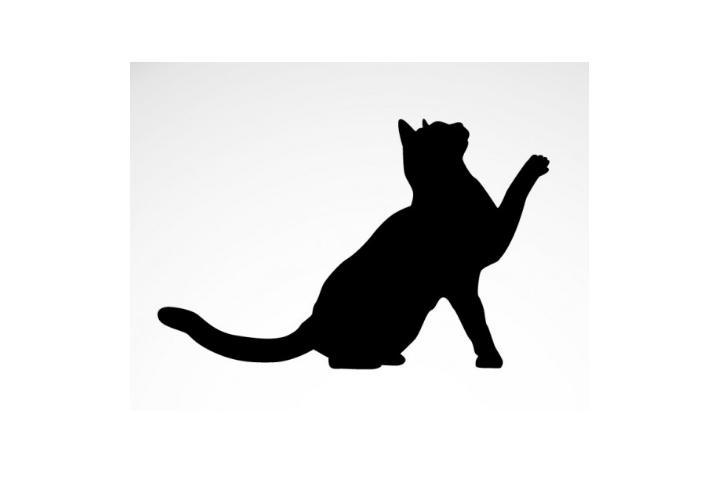 Los Gatos de Diego