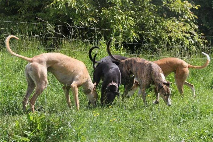 Clare Greyhound Sanctuary