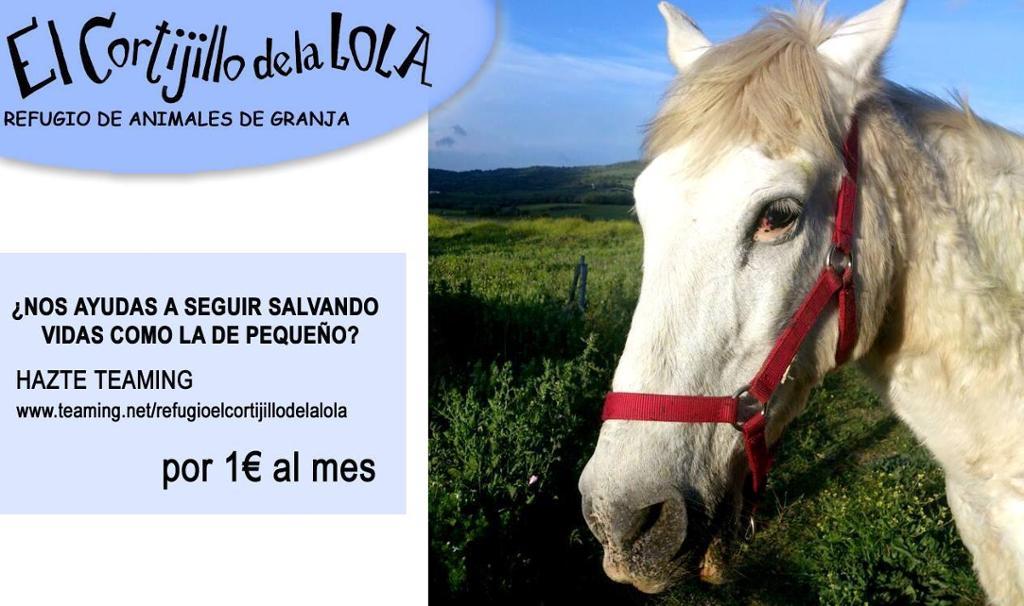 El Cortijillo de la Lola 2€