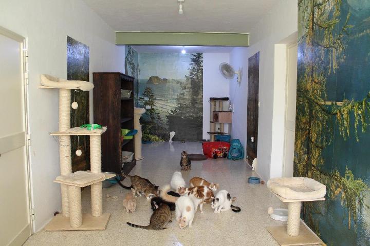 Sigi und die Maltakatzen