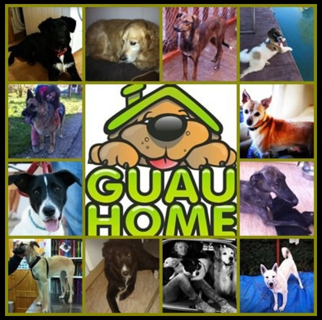 GuauHome!!!!! Ayúdanos a ayudarles