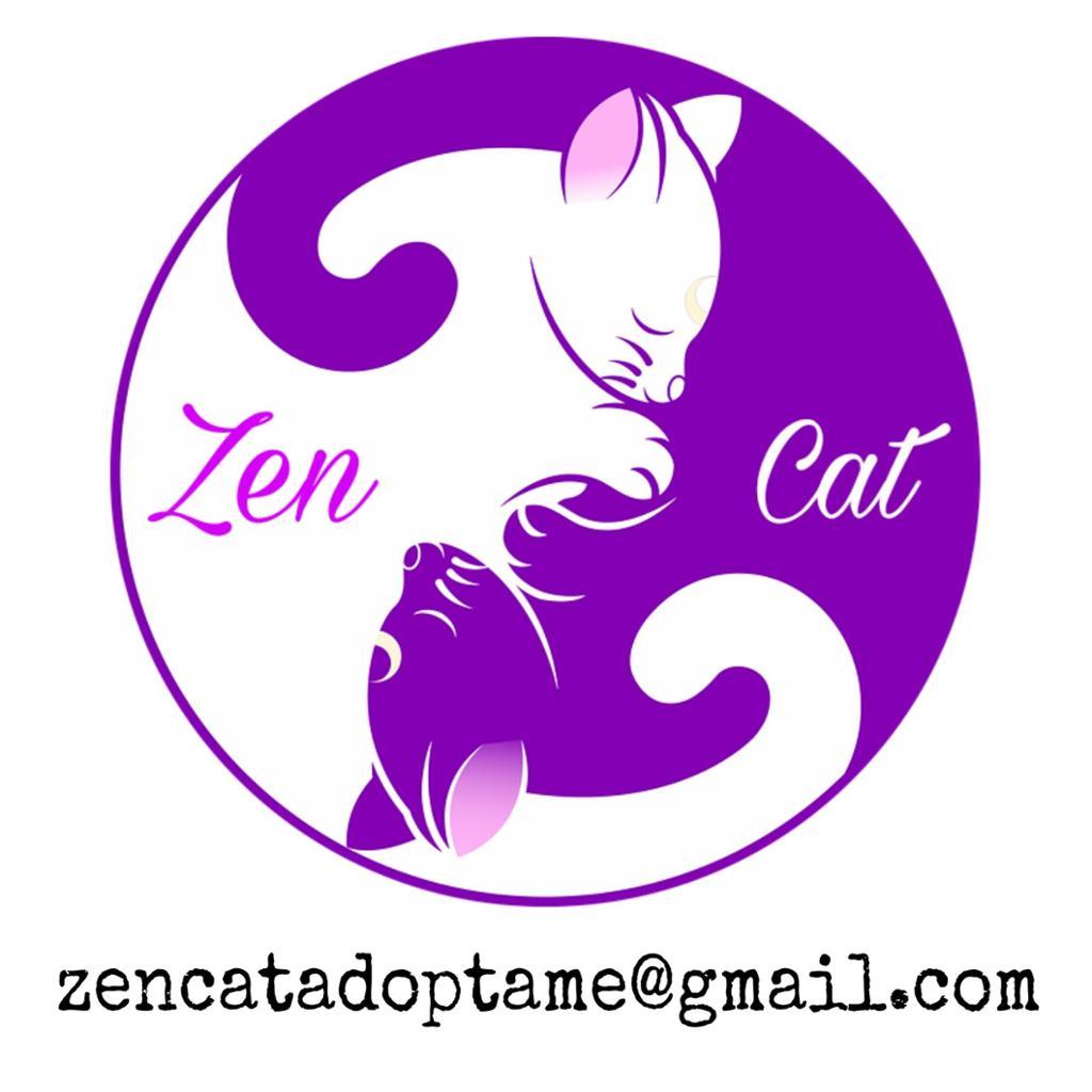 Zen Cat - Adoptame