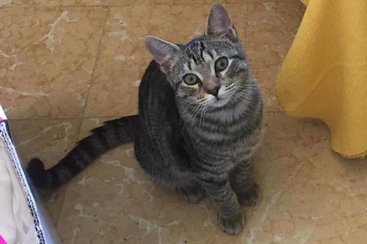 Care4Cats - UK charity supporting Ibiza cats