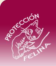 Protección Felina - Gastos veterinarios