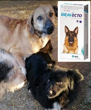 Helping Hands for Romanian Strays e.V.