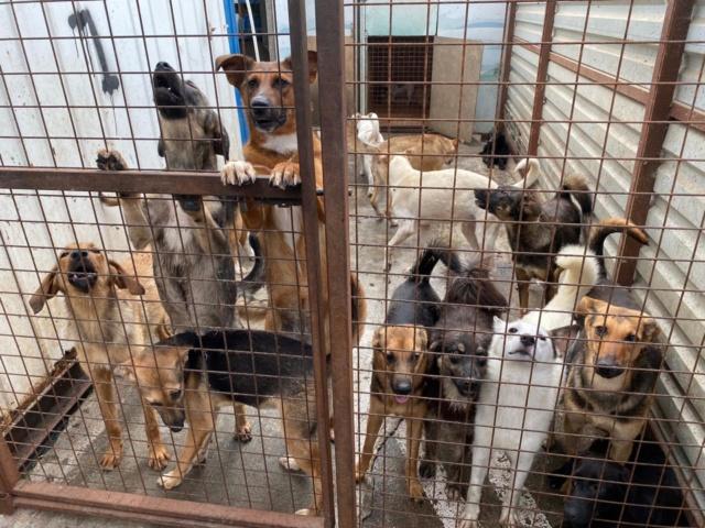 Mukitza: Aide aux chiens et chats de Sotchi