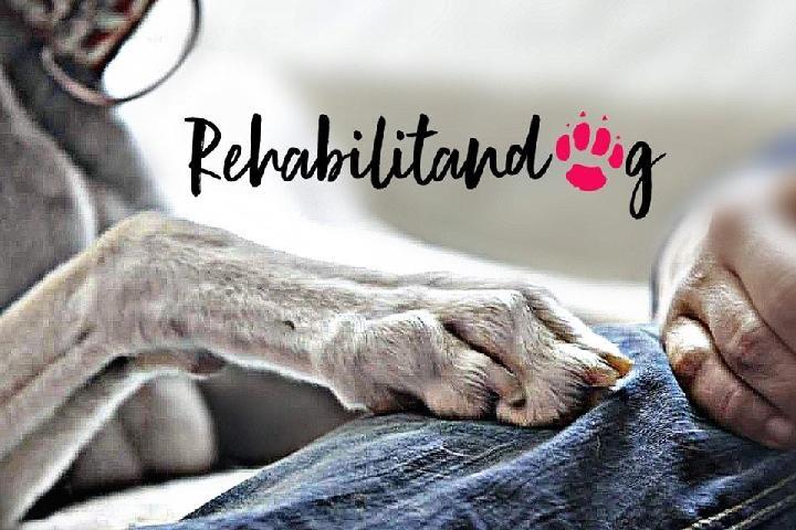 Rehabilitandog
