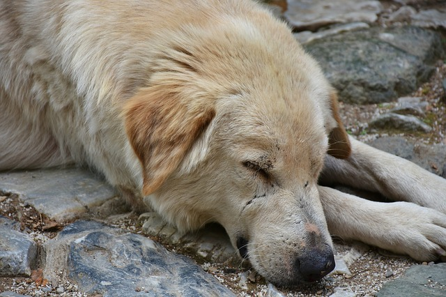 Help for Dogs from Azoren