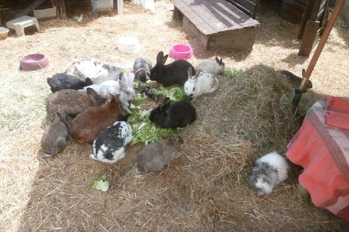 la Grange aux Lapins