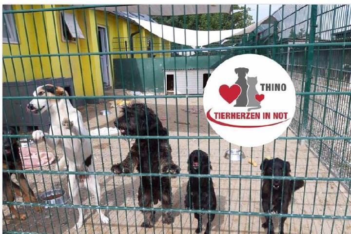 Thino-Tierherzen in Not