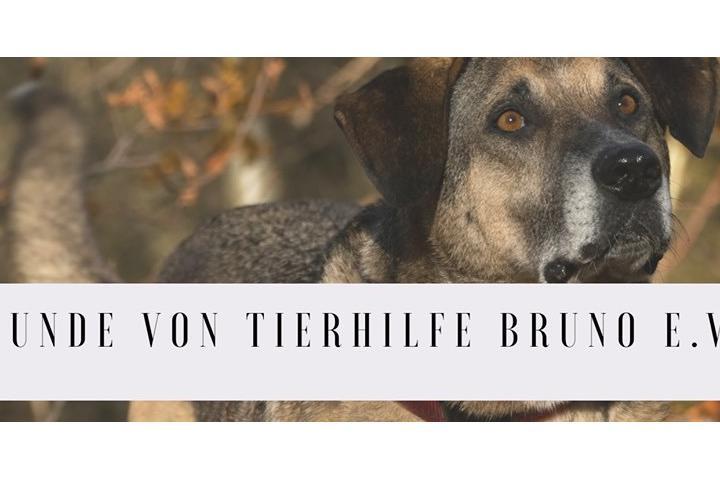Tierhilfe Bruno e.V.