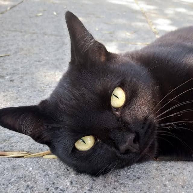 Los gatos de la feria-serman