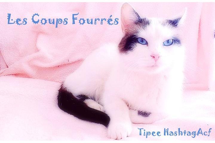 Association Les Coups Fourrés #ACF