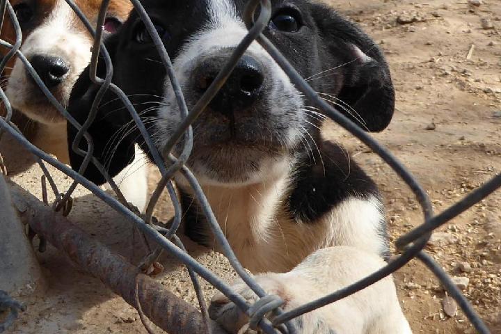 refugio de animales la ginesta