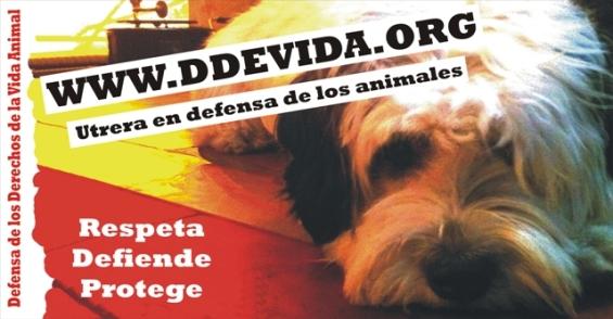 Asociación DDEVIDA