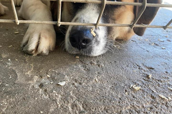 Arme Hundeseelen aus Rumänien e.V.