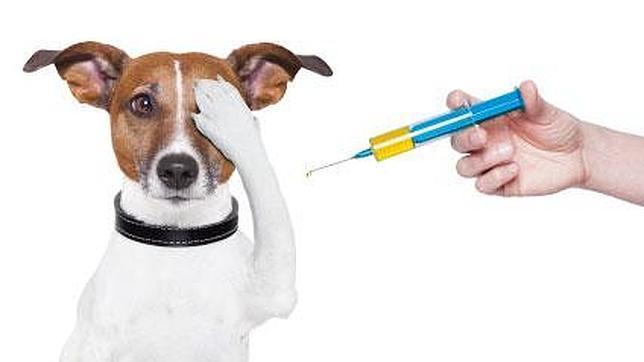 Fondo veterinario Zarpas y Colmillos
