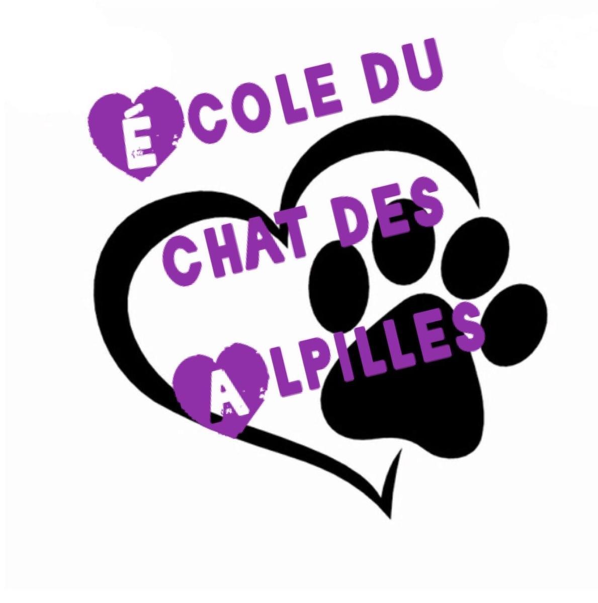École du chat des Alpilles