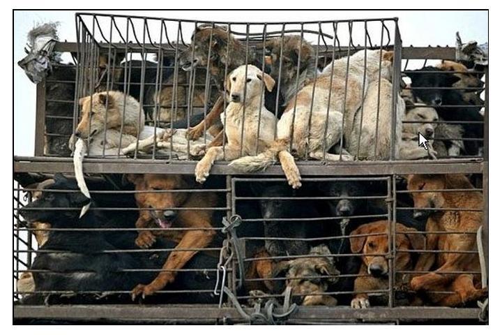 The Soi Dog Foundation