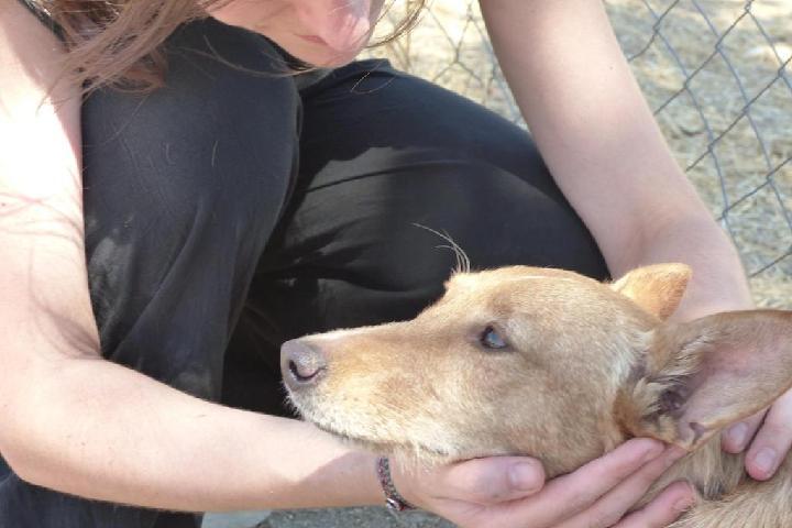Amanecer Animal adopciones
