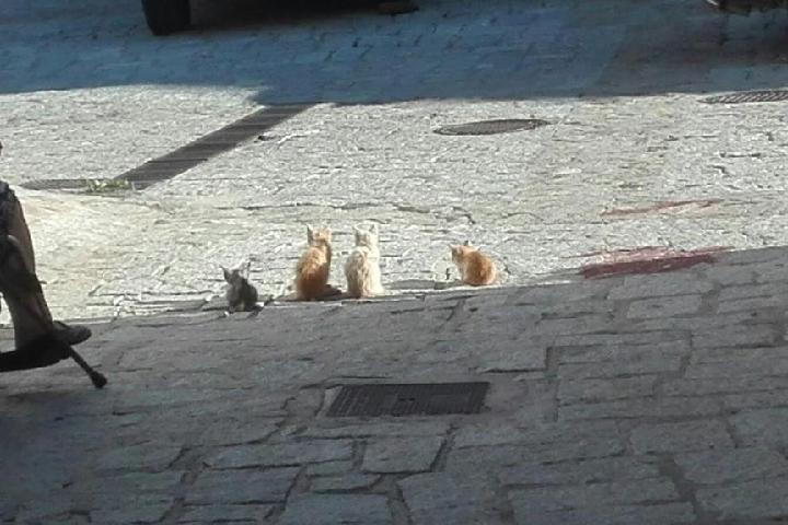 Colonia felina en La Acebeda