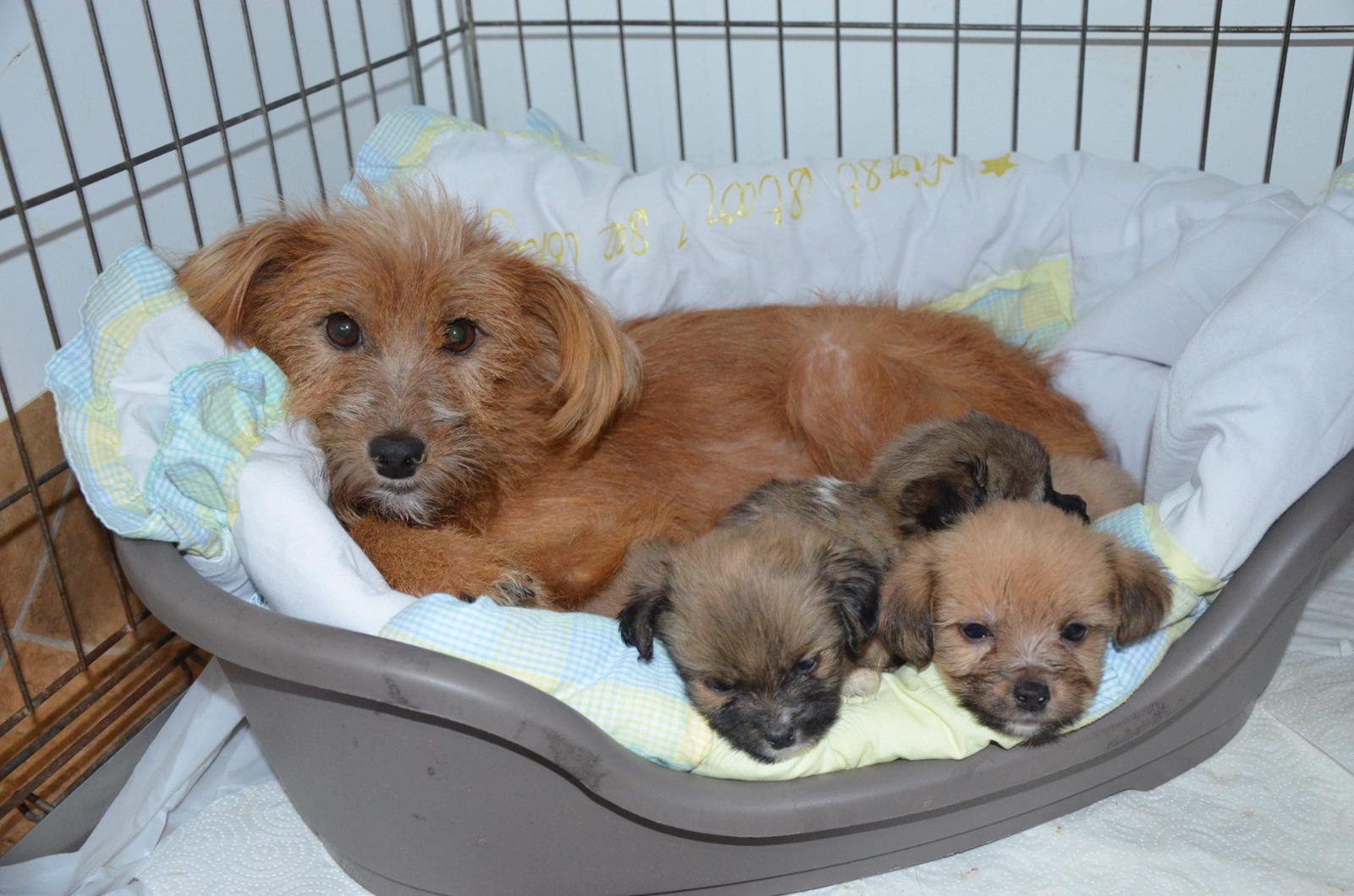 2. Chance Golestis Hunde - Hoffnung auf ein neues Leben