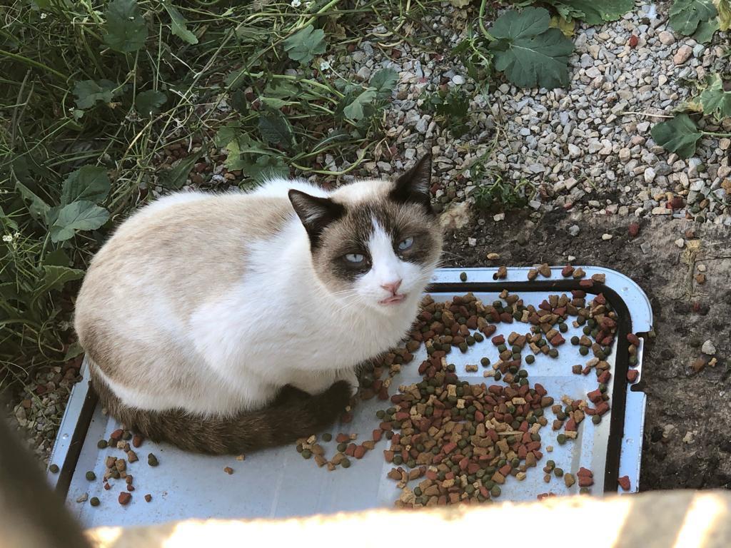 Por los gatos del mundo sin hogar