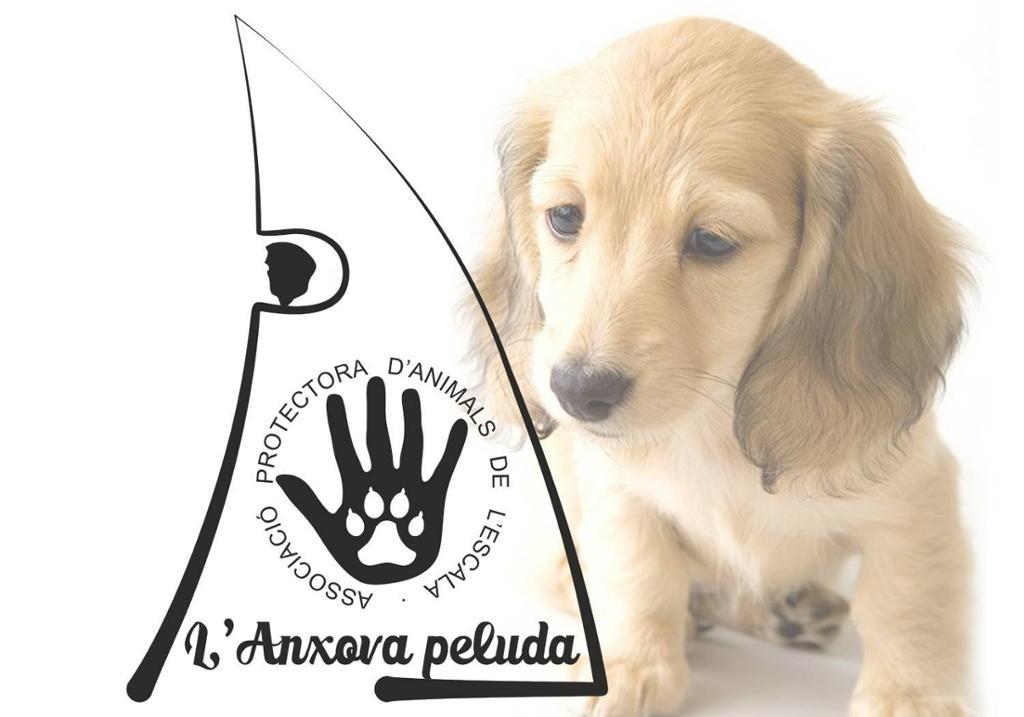 Associació Protectora Animals l'Anxova Peluda