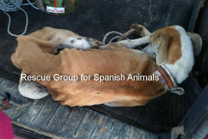 Rescue Group for Spanish Animals & ALMA