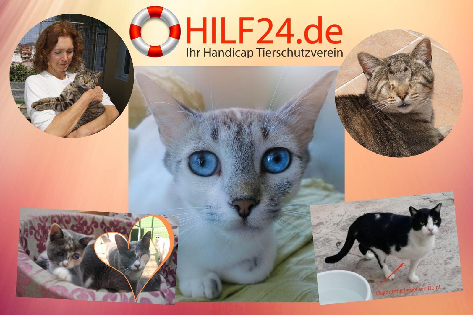 Hilf24.de - Ayuda para animales especiales...