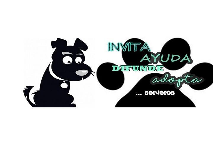 IADA Mascotas