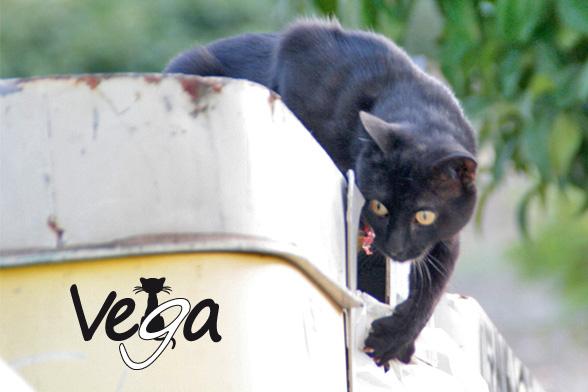 Asociación de Protección Animal Vega