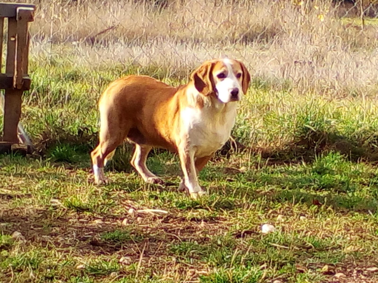 APADA Asoc. Protectora de Animales de Astorga