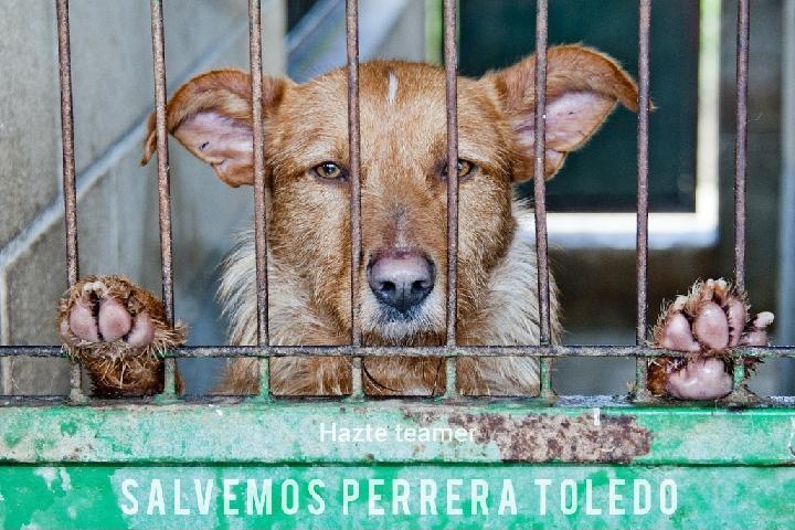 Protección Animal Por Los Pelos