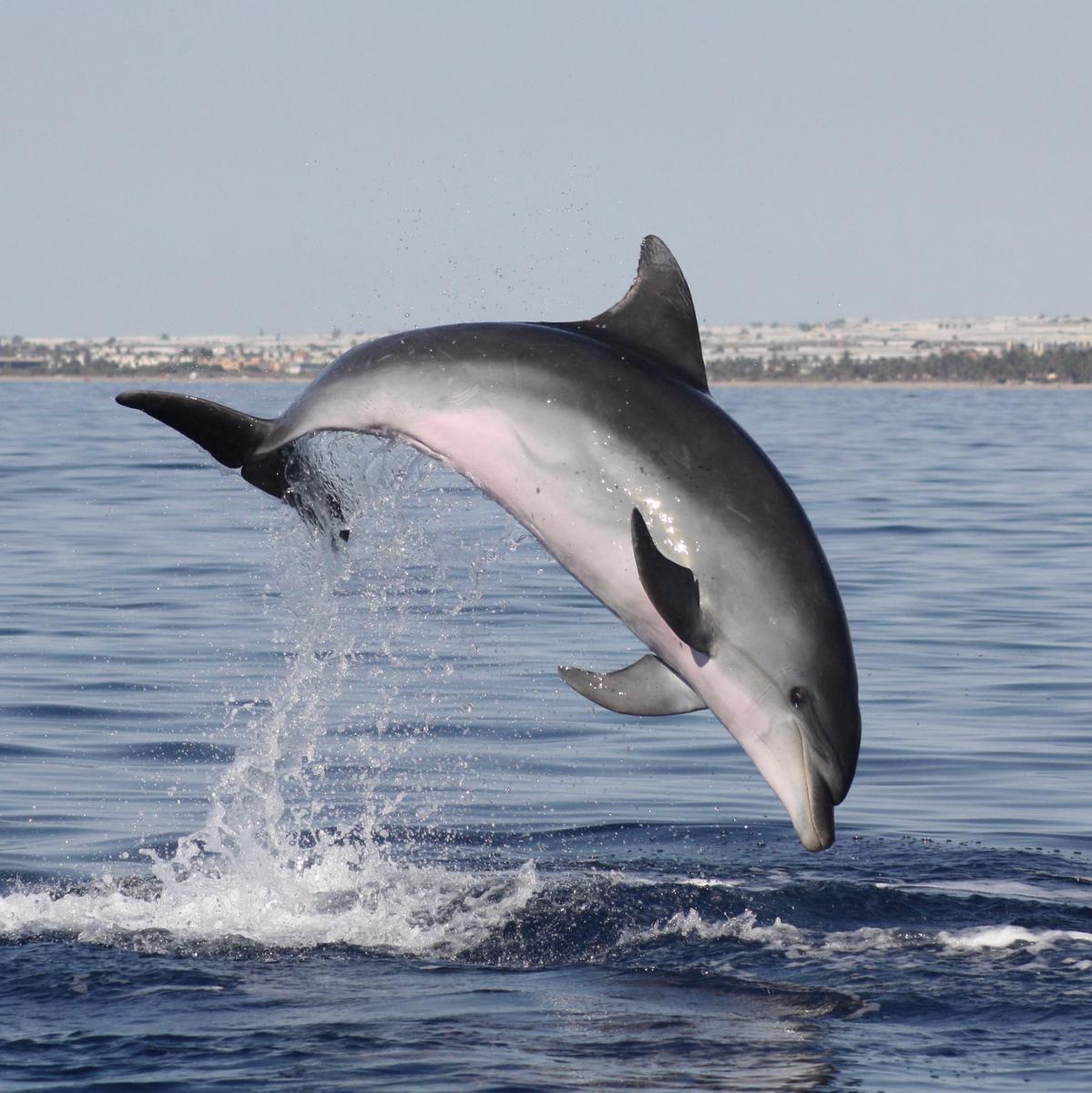 Ecologistas en acción por el mar