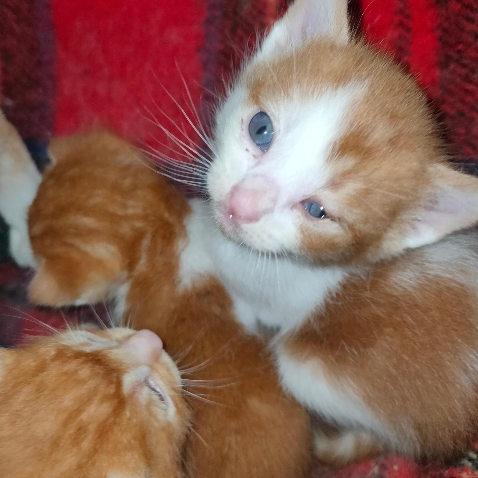 Felinos Indefensos ( de Centro Felino Silvestre )