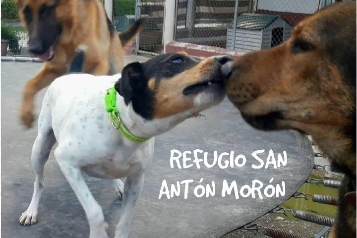 Refugio Canino San Antón Morón