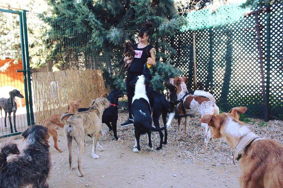 Asociación Mejora, Terra de Cans
