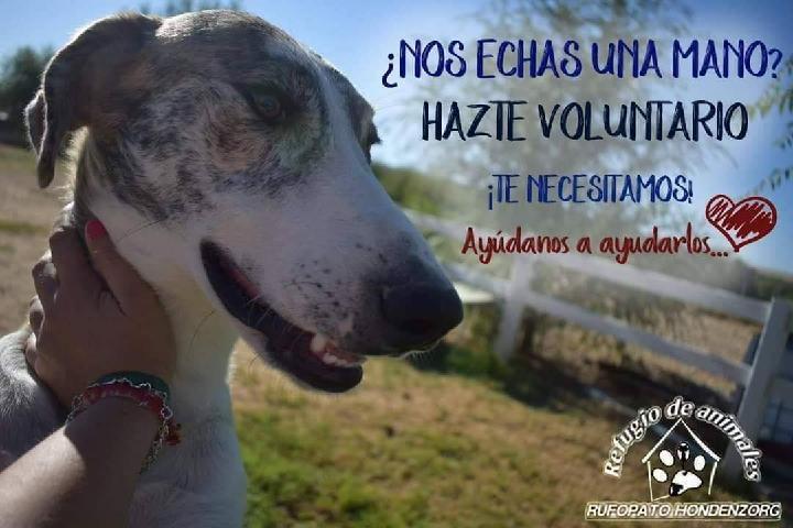 Medisch hulpfonds 2013 | Hondenzorg